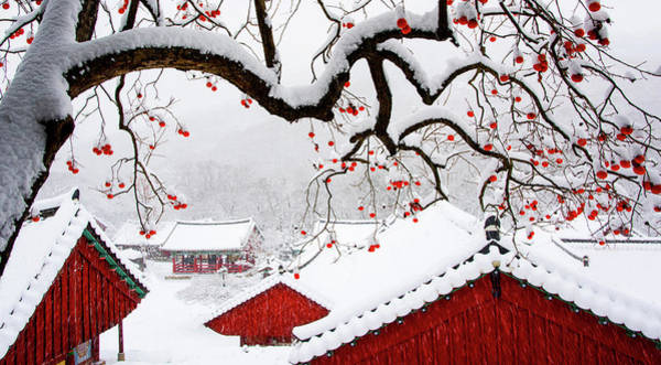 Wall Art - Photograph - Snow In Temple by Bongok Namkoong