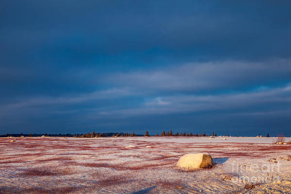 Photograph - Snow In The Barrens by Susan Cole Kelly