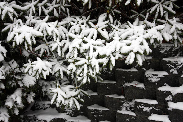 Photograph - Snow In The Garden by Gerry Bates