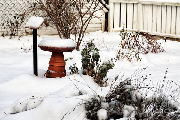 Photograph - Snow In The Garden by John Rizzuto