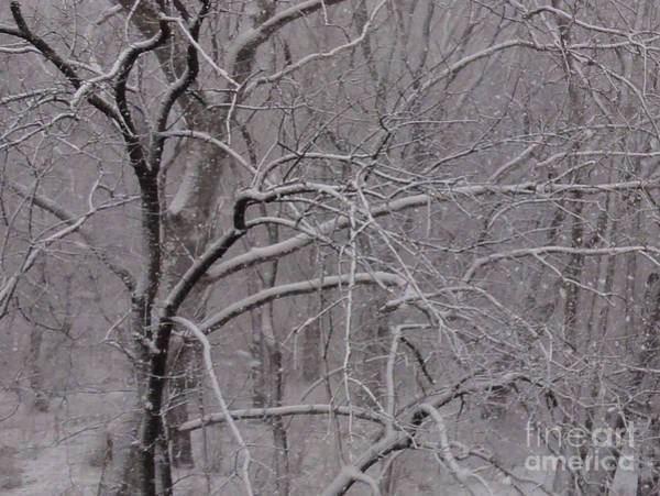 Snow In The Trees At Bulls Island Art Print