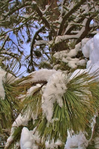 Fantasy Wall Art - Photograph - Snow In Tree by Tony Castle
