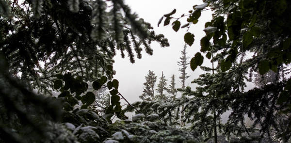 Photograph - Snow In Trees At Narada Falls II by Greg Reed