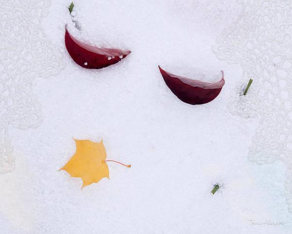 Snow Kissed Art Print