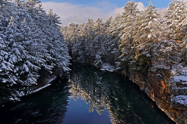 Photograph - Snow-laden Branches At The Dell Creek by Leda Robertson