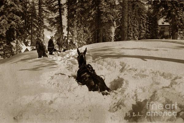 Photograph - Horse Way Deep In Snow Lake Tahoe California Circa 1910 by California Views Archives Mr Pat Hathaway Archives