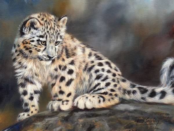 Big Cat Wall Art - Painting - Snow Leopard Cub by David Stribbling