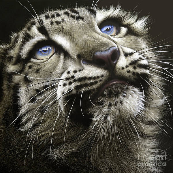 Wall Art - Painting - Snow Leopard Cub by Jurek Zamoyski
