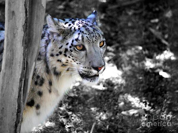 Photograph - Snow Leopard I by Jai Johnson