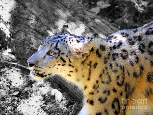Photograph - Snow Leopard IIi by Jai Johnson