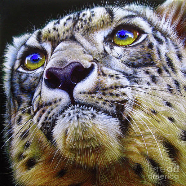 Wall Art - Painting - Snow Leopard by Jurek Zamoyski