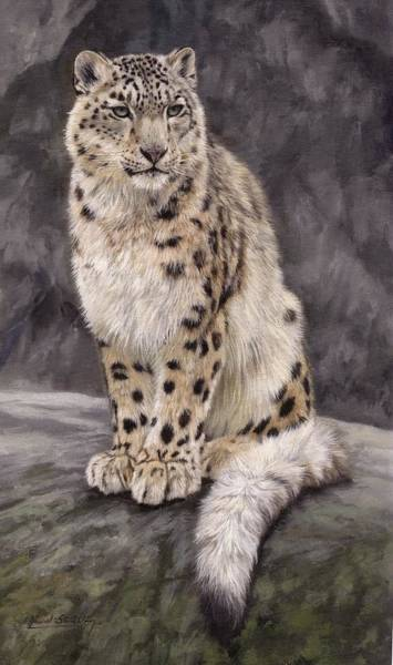 Snow Leopard Wall Art - Painting - Snow Leopard Sentry by David Stribbling