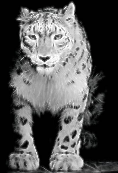 Photograph - Snow Leopard  by Terry DeLuco