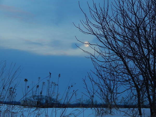 Photograph - Snow Moon by Wild Thing