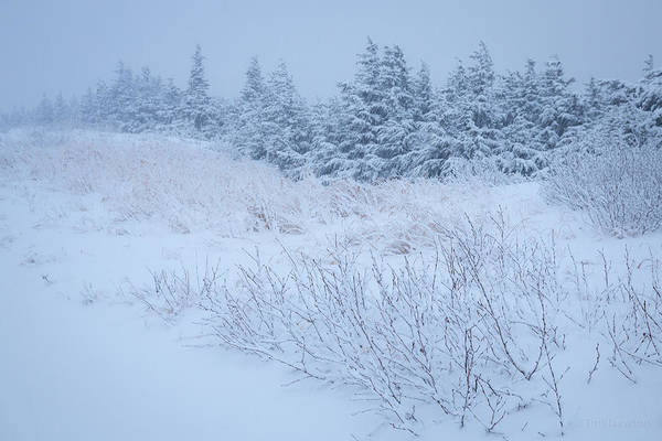 Photograph - Snow On New Years Eve by Tim Newton