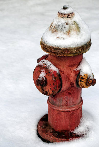 Photograph - Snow On The Hydrant by John Rizzuto