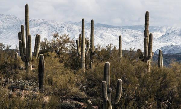 Photograph - Snow Season by Tam Ryan