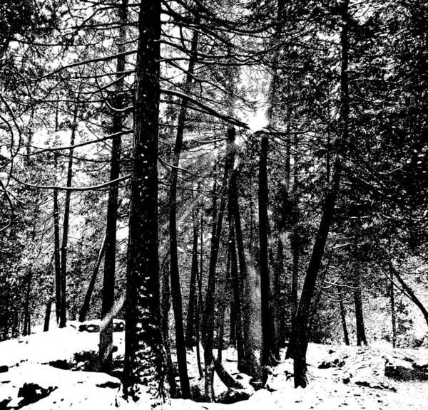 Cedar Key Photograph - Snow Shower by Debbie Oppermann