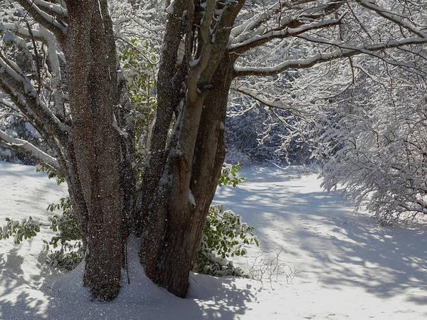Wall Art - Photograph - Snow Sparkles by Dianne Cowen