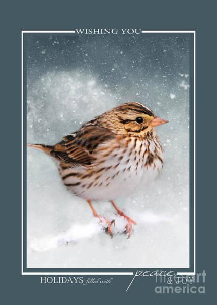 Photograph - Snow Sparrow Song Bird Christmas Cards by Jai Johnson