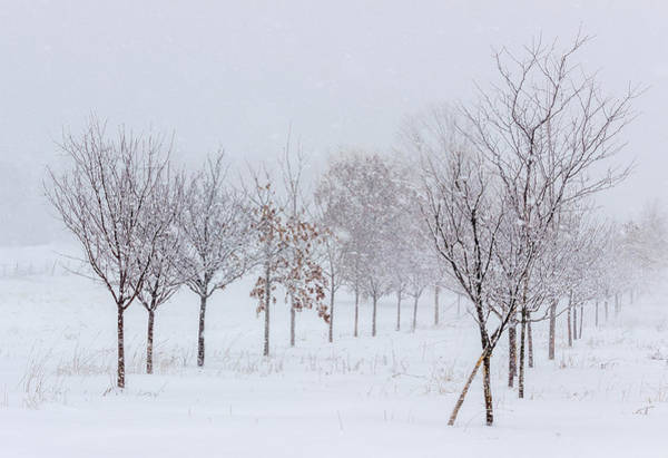 Photograph - Snow Storm by Pete Hendley