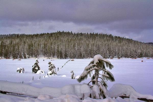 Fantasy Wall Art - Photograph - Snow by Tony Castle
