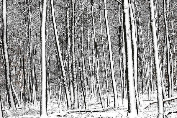 Photograph - Snow Trees by Dawn J Benko