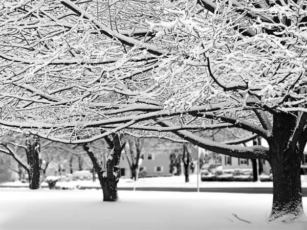 Photograph - Snow Trees by Sandy Scharmer