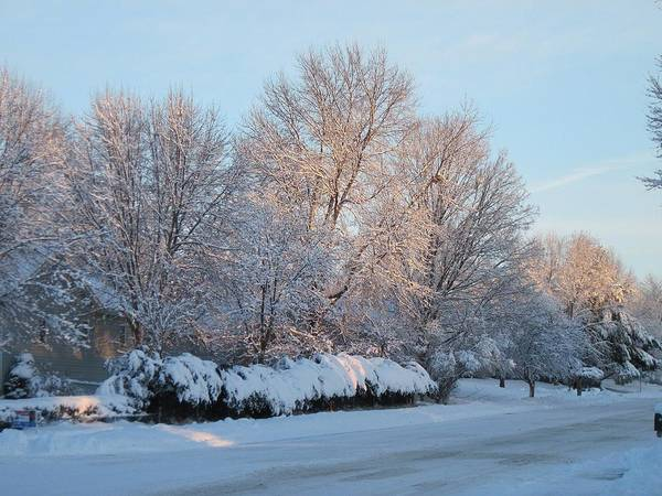Digital Art - Snow Trees Sunrise 2-2-15 by Doug Morgan