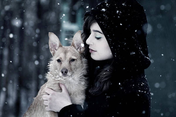 Dogs Photograph - Snow Walk by Cambion Art