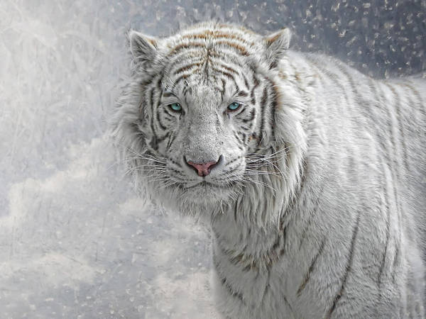 Big Cat Wall Art - Photograph - Snow White by Joachim G Pinkawa