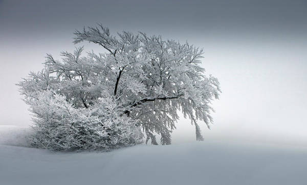Wall Art - Photograph - Snow_baum by Nicolas Schumacher