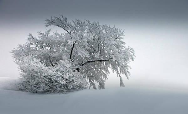 Wall Art - Photograph - Snow_baum by Nicolas Schumacher