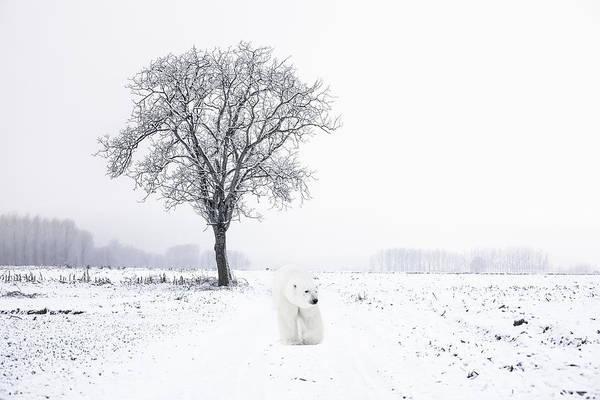 Christmas Photograph - Snowbird by Daniel Hagerman