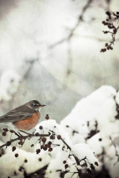 Mixed Media - Snowbird by Trish Tritz
