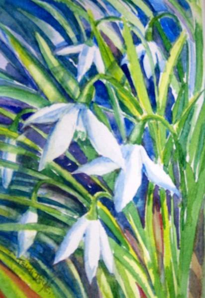 Snowdrop Painting - Snowdrops by Trudi Doyle