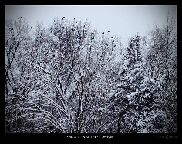 Photograph - Snowed In At The Crowport by Tim Nyberg
