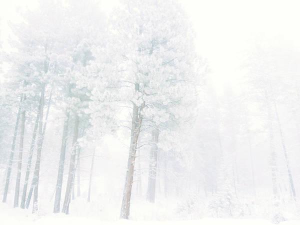 Photograph - Snowed In by Tara Turner