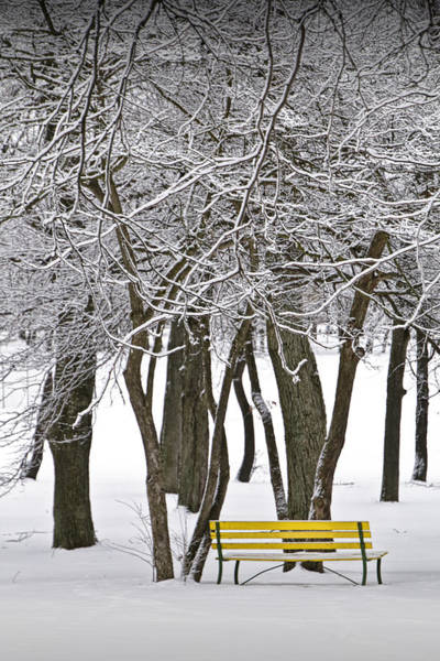Photograph - Snowfall At Garfield Park With Yellow Park Bench No. 1069 by Randall Nyhof