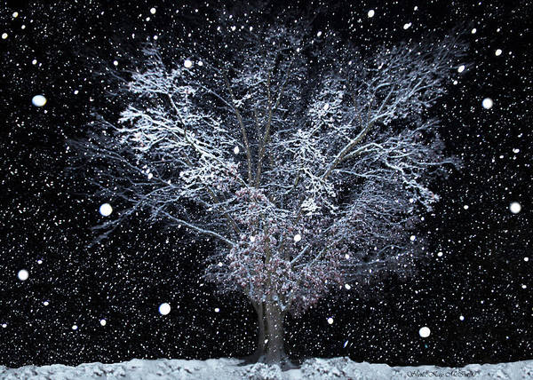 Photograph - Snowfall At Night by Sheila Kay McIntyre