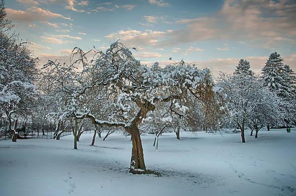 Photograph - Snowfall Ends At Twilight by Gary Slawsky