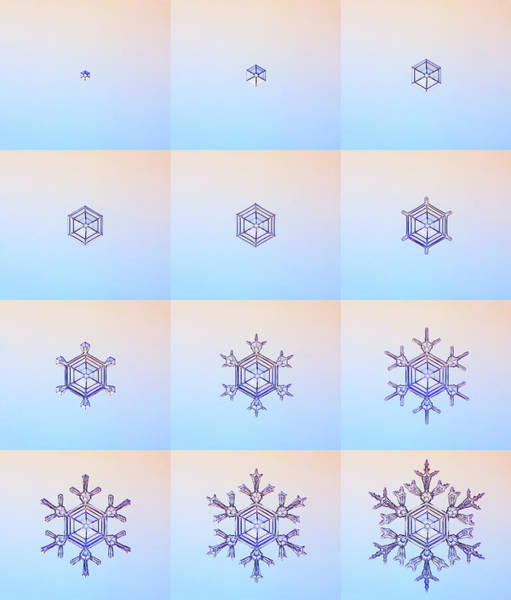 Forming Wall Art - Photograph - Snowflake Formation by Kenneth Libbrecht