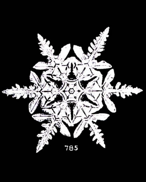 First Light Wall Art - Photograph - Snowflake by Noaa/science Photo Library