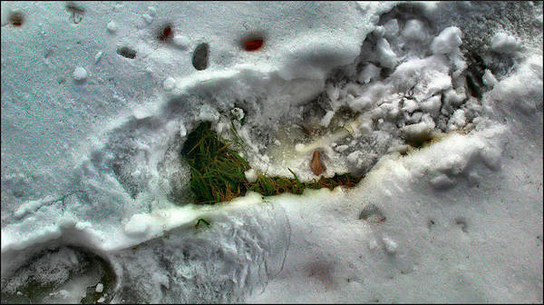 Photograph - Snowgrassleafcomp 2009 by Glenn Bautista