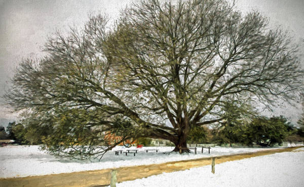 Photograph - Snowy Live Oak by Jerry Gammon