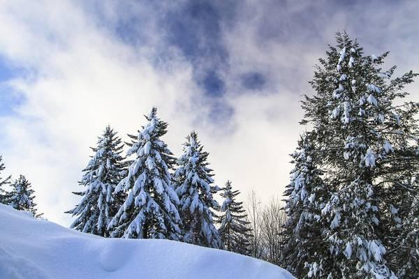 Photograph - Snowscape by Doug McPherson