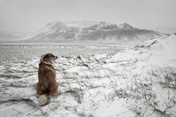 Alone Photograph - Snowstorm by Bragi Ingibergsson -