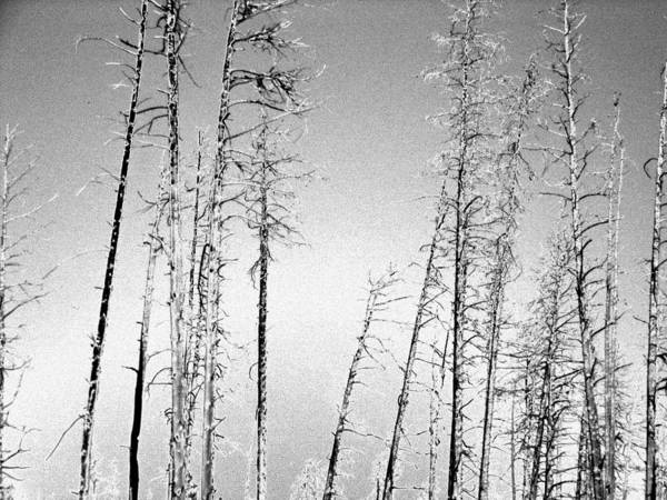 Photograph - Snowstorm by Tarey Potter