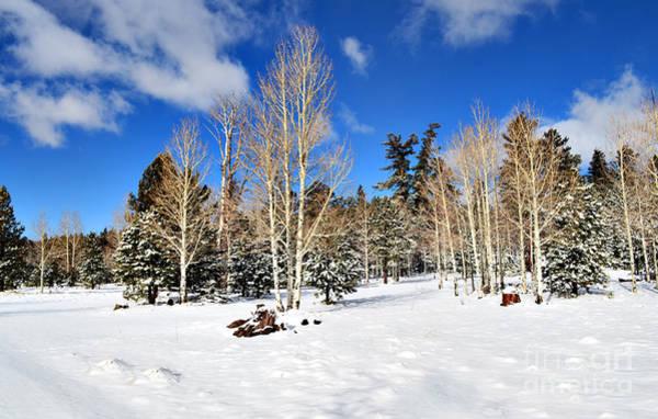 Snowy Aspen Grove Art Print