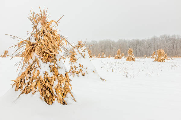 Photograph - Snowy Corn Shocks by Chris Bordeleau